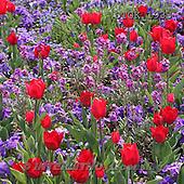 Gisela, FLOWERS, photos+++++,DTGK1933,#f#