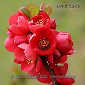 Gisela, FLOWERS, BLUMEN, FLORES, photos+++++,DTGK1919,#f#