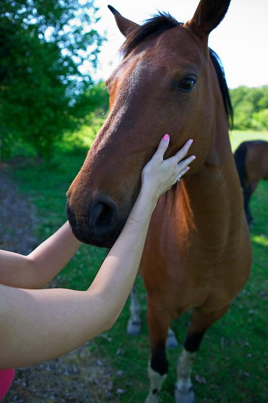 woman petting horse.