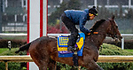 November 1, 2018: McKinzie, trained by Bob Baffert, exercises in preparation for the Breeders' Cup Classic at Churchill Downs on November 1, 2018 in Louisville, Kentucky. Carolyn Simancik/Eclipse Sportswire/CSM