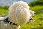 Seward Park, Seattle Parks and Recreation. Poodle dog
