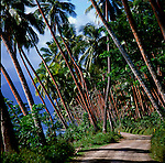 Row of palm trees along coastal road.Lautoka, Fiji,South Pacific.