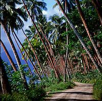 Row of palm trees along coastal road.Lautoka, Fiji,South Pacific.