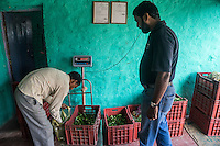 Technoserve's Market Linkage Manager, Rajiv Shinde, looks on as collection centre owner Ganesh Kumar Singh (in white shirt), 30, weighs and sorts out vegetables that other producer group farmers bring in to be sold to his collection centre in Machahi village, Muzaffarpur, Bihar, India on October 27th, 2016. Ganesh and his wife, Asha Devi, a producer group member, rent out a part of their house to be used as a collection centre for Producer Group farmers. Non-profit organisation Technoserve works with women vegetable farmers in Muzaffarpur, providing technical support in forward linkage, streamlining their business models and linking them directly to an international market through Electronic Trading Platforms. Photograph by Suzanne Lee for Technoserve