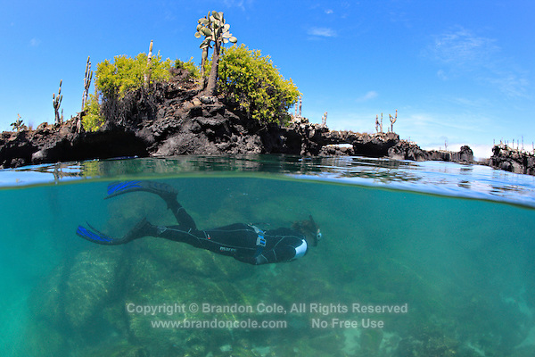 qs0890-D. man snorkeling in pool surrounded by lava flows. Los Tuneles, Galapagos Islands, Ecuador, Pacific Ocean.<br /> Photo Copyright &copy; Brandon Cole. All rights reserved worldwide.  www.brandoncole.com
