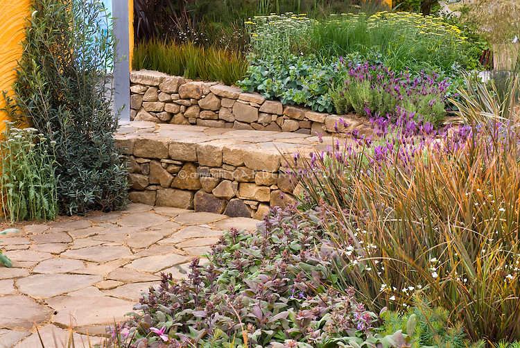 Stone bench wall and patio with herbs and flowers, Libertia ornamental grasses, culinary sage Salvia officinalis, Lavandula lavender herbs, Achillea yarrow, - easy low-maintenance flowers and plants, many also of use for fragrance and culinary