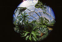 Palm House in Kew Gardens, London, United Kingdom. RESERVED USE - NOT FOR DOWNLOAD -  FOR USE CONTACT TIM GRAHAM