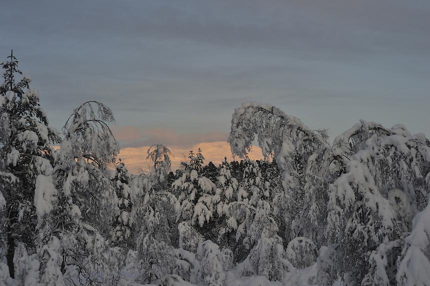 Snowy trees,Norway Landscape, landskap,