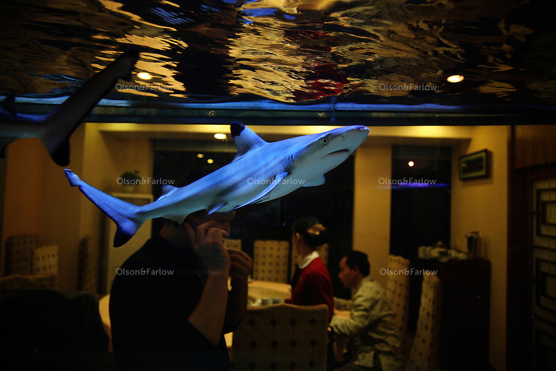 Three Black Tip Sharks in Tank at Guangzhou Restaurant (I only have name in Chinese at the moment)  Phone is (020)87777075.Main contact:.Nicole_artbud@hotmail.com or nicolecheng@vip.sina.com.Cell phone number: +(86) 139 2214 1600.Nicole Cheng.Senior Associate-Guangzhou.Burson Marsteller.Room 6805A, CITIC Plaza, 233 Tianhe North Road.Guangzhou, 510613 P.R.C..+8620 3877 1820 X229 Work Phone.3877 1815 Fax.Nicole_cheng@bm.com.Initially reef fish only came from the South China Sea, but transport developed and fish now come from all over S.E. Asia.  The whole reef fish trade crashed with the 97-98 HK stock market crash.  LRF trade is directly linked to economy.  With China coming online financially the trade is booming.  These fish are often used for celebratory meals in Hong Kong, but in Guangzhou the fish are so cheap and the apartments are so small that many people eat out...  And the stereotype is that there is lots of food left on the table.  Often a fish is popular because of its color... more than its taste.