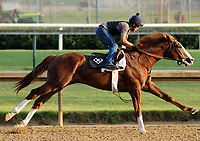 LOUISVILLE, KY -MAY 28: Free Drop Billy breezed five furlongs at Churchill Downs, Louisville, Kentucky, in preparation for the June 9 Belmont Stakes. (Photo by Mary M. Meek/Eclipse Sportswire/Getty Images)
