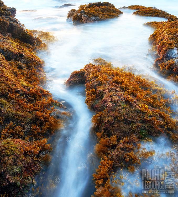 Ocean waves navigate between and over seaweed-covered rocks along the Kailua-Kona coast of Hawai'i Island.