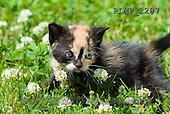 Marek, ANIMALS, REALISTISCHE TIERE, ANIMALES REALISTICOS, cats, photos+++++,PLMP2287,#a#