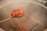 NWA Democrat-Gazette/ANTHONY REYES &bull; @NWATONYR<br /> A sous chef checks on crawfish boiling in a pot of water Wednesday, April 15, 2015 at The Hive, inside the 21C hotel in Bentonville. Many boils happen this time of year. The Hive's boil featured a four course meal with crawfish flown in fresh from the gulf coast. Chef Matt McClure created each dish.