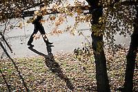 111101_Leaves