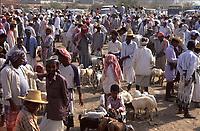Yemen, Wadi Moor sheep market,
