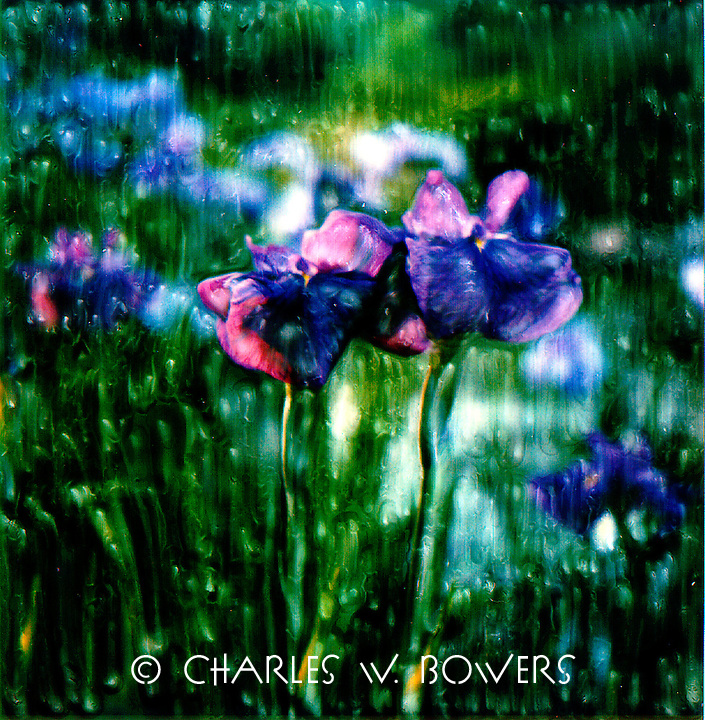 Japanese iris are primarily shades of purple and blues. This graceful iris reminds me of a large butterfly as it sways in the gentle breeze as I stroll through my garden.<br /> <br /> -Limited Edition of 50 Prints