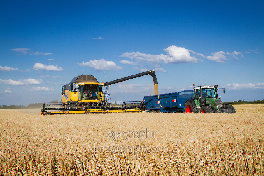 Harvesting winter barley with New Holland CR9080 combines - July; South Lincolnshire