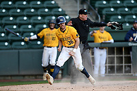 Center fielder Michael Jamele (36) of the Merrimack Warriors shouts as he scores a run in a game against the Michigan State Spartans on Saturday, February 22, 2020, at Fluor Field at the West End in Greenville, South Carolina.  The home plate umpire is Tim Catton. Merrimack won, 7-5. (Tom Priddy/Four Seam Images)