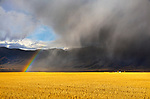 Gallatin County, MT: Sunlight on harvested wheat field with rainbow and storm clouds over the Bridger Range