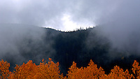 Rick Wilson Photo--9/24/07--Autumn scenes of mountains, aspen trees, pine trees, leaves changing color, streams, wildlife, clouds, snow and fog in and around Rocky Mountain National Park in central Colorado in late September.