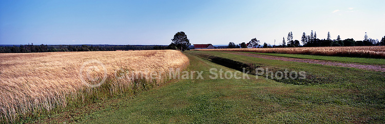 Barley Field near Mount Buchanan, PEI, Prince Edward Island, Canada - Panoramic View