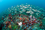 Coral reefs in Juno Beach, Florida, are home to hundreds of varieties of fish life, sea turtles, corals and sponges.