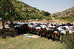 Palestinians pray during a protest against land confiscation by nearby Jewish settlements, Wadi Qana, in the West Bank village Deir Istia , Friday, April 27, 2012 . Photo by Wagdi Eshtayah