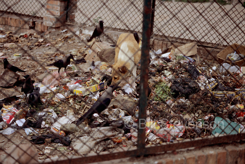 Filth is pervasive. In this picture garbage in a vacant lot is forage for all kinds of animals.