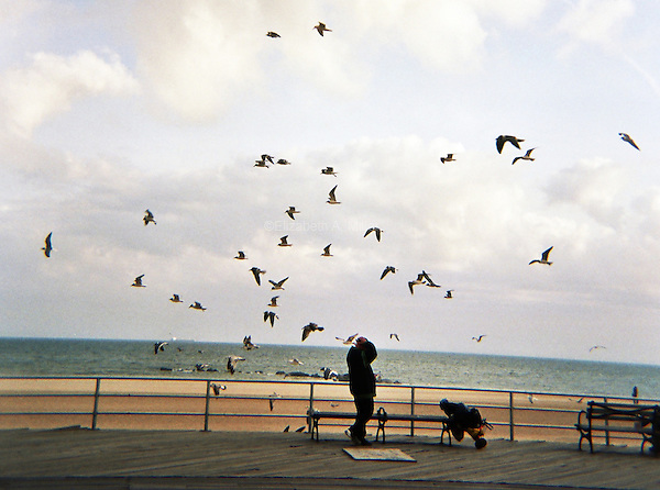 Birds and a man on the boardwalk at Brighton Beach in Brooklyn, New York on an April afternoon.