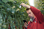 Foto: VidiPhoto<br /> <br /> BEEK EN DONK – Op zoek naar de tomatengalmijt bij tomatenkweker Eric Vereijken op de locatie in Beek en Donk. Om de mijten te kunnen ontdekken wordt de Dino-Lite gebruikt, een mobiele microscoop die via een app of smartphone of tablet af te lezen is.