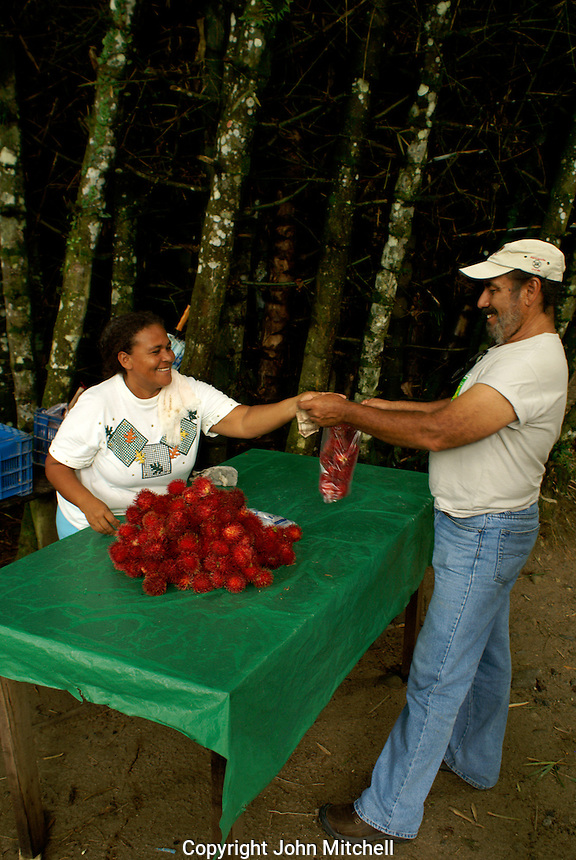 Guide buying lychee nuts at Lancetilla Botanical Garden, Honduras. Lancetilla Garden was established by American botanist William Popenoe in 1926.
