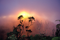 Sunset near misty ohia trees on the garden island of Kauai