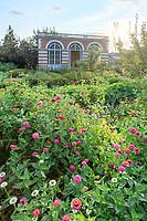 France, Sarthe (72), Le Lude, château et jardins du Lude, le potager, l'orangerie et zinnias