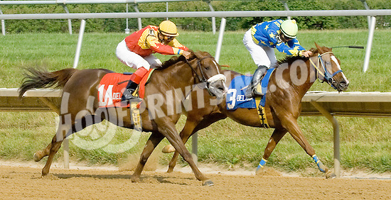 Wycked winning The Dr. Sam Harrison Juvenile Arabian Stakes at Delaware Park on 7/4/12