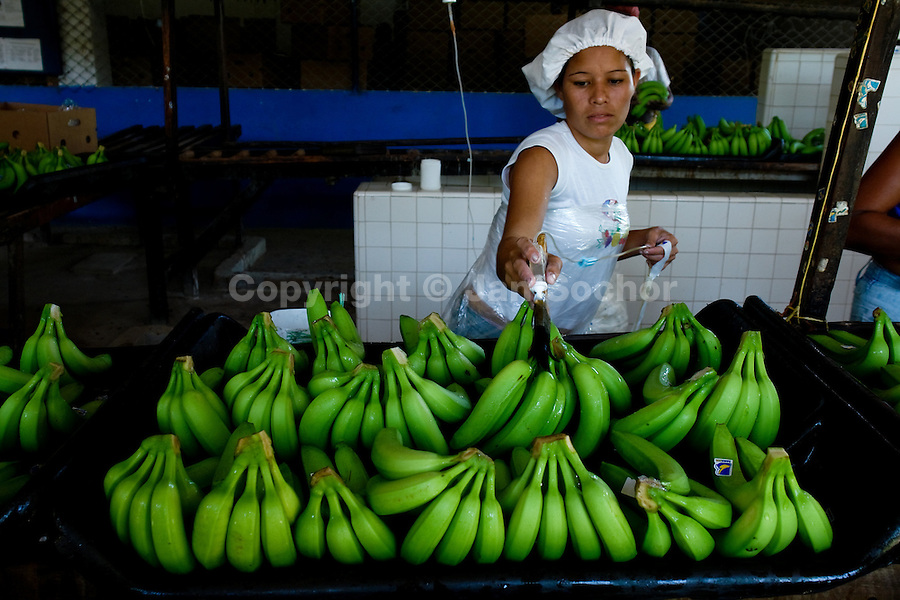 A Colombian girl applying chemicals to bananas before packaging on the banana plantation in Aracataca, Colombia, 14 March 2006. Eighty percent of the exported bananas in the world are grown in Latin America. Local farms have no other alternative than to sell for a price offered by the multinational company. When working conditions and ecology is in question, the corporations do not have any responsibility as they do not own plantations. Local governments in the attempt of organizing banana export provide low duty taxes on export, they try to eliminate social and enviromental politics to attract the big companies to their countries.