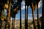 Indian Canyons Andreas Canyon Section Palm Springs California USA.