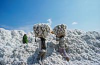 INDIA Kasrawad, organic cotton at storage place in ginning factory / INDIEN Kasrawad, Biobaumwolle auf dem Lagerplatz einer Entkernungsfabrik