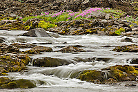 Flowers and glacial stream, Iceland
