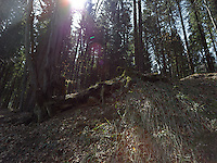 FOREST_LOCATION_90216