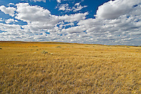 native prairie grasslands.  (West Block) <br /> Grasslands National Park<br /> Saskatchewan<br /> Canada