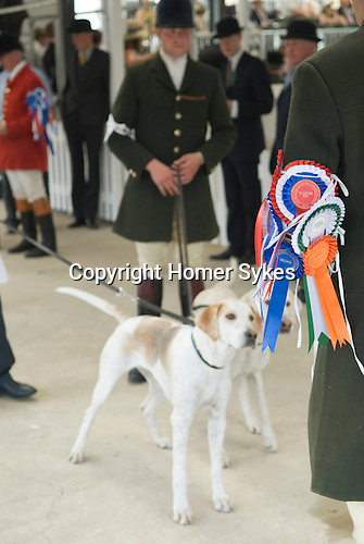 Festival of Hunting Peterborough Uk. Huntsman showing foxhounds with an arm full of rosettes. 2013