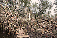 Ghana - Volta region - A mangroove forest along the Volta river heavily damaged by Men.  The cutting of mangroves for firewood has removed one of the most effective natural tools for protecting the coast, resulting in increased erosion in various parts of the coastline.