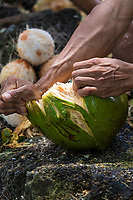 A young local man husks a coconut he just harvested on Kaua'i.