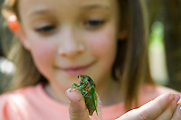A young girl holds a cicada pumping its wings full of blood after emerging from the ground and shedding its pupal stage skin.