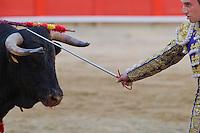 Torreador fights against the bull in the arena Plaza del Toros Monumental in Barcelona, Spain. Sunday, 04. May 2008. ATTILA VOLGYI