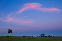 A pink clouds seems to dance in the sky during the sunrise in the Masai Mara, Kenya