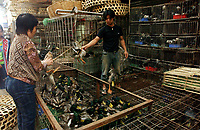 """A wild duck stall at Lo Chun Wai (wild Animal Food) Market on the outskirts of Guangzhou, Guangdong Province, South China in this file photo. China's wild animal markets, where live wild animals and reared animals are sold are the source of many viruses that mutate as they """"jump"""" from animals to humans. The coronavirus COVID-19 is thought to have originated in an animal market in China. <br /> By Sinopix Photo Agency"""