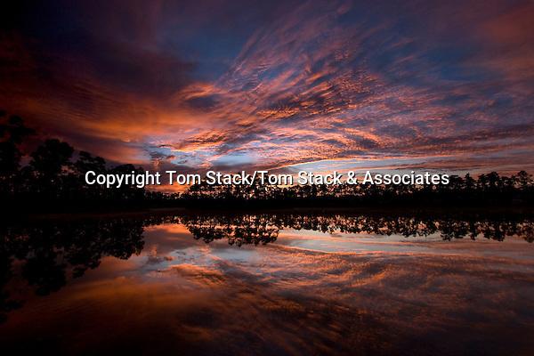 Daybreak at Long Pine Key, Everglades National Park, Florida