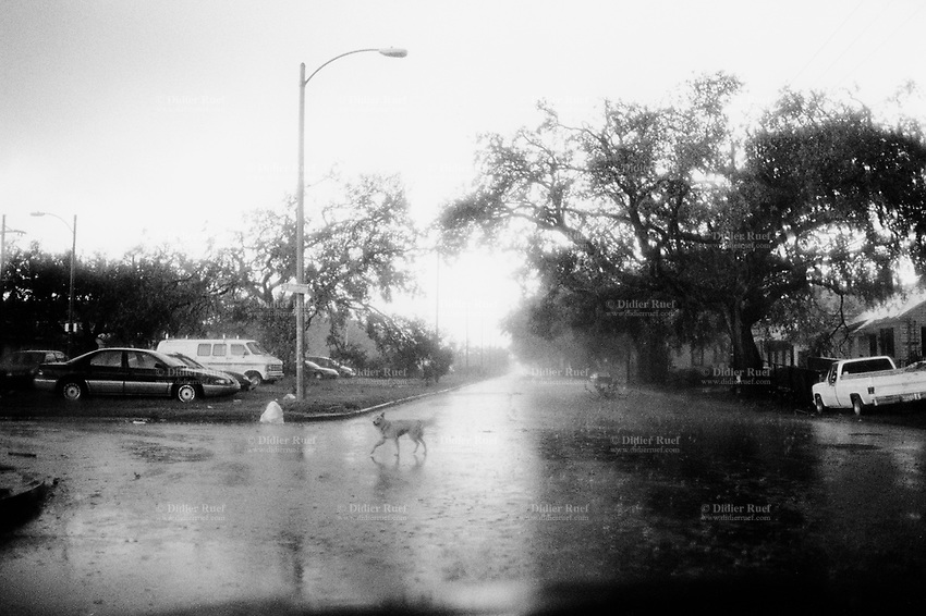 USA. Louisiana. New Orleans. Orleans Parish. Rain and storm are due to the approach of hurricane Rita. The town is already empty due to the aftermath of hurricane Katrina. Most of the inhabitants have left the town. Just dogs and cars are still on the roads and streets. Emptiness and loneliness of the urban american way of life. © 2005 Didier Ruef