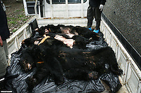 "Three dead bears on the truck in Chengdu, Sichuan, China. The rescue was conducted by Animals Asia Foundation. The foundation rescued 28 ""moon"" bears from horrendous bea-bile farms in the area. Animals Asia is run and founded by UK national Jill Robinson, M.B.E."